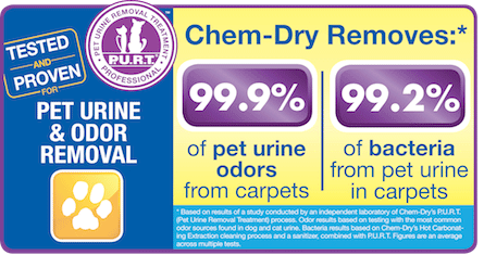 Pet Urine and Odor Removal by Chem-Dry of Manhattan